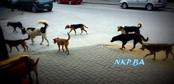 psi lutalice kalesija